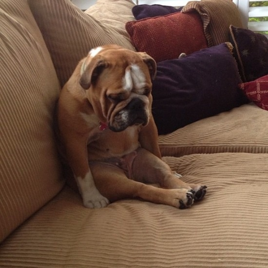 Disappointed-Dog-Face-08.jpg