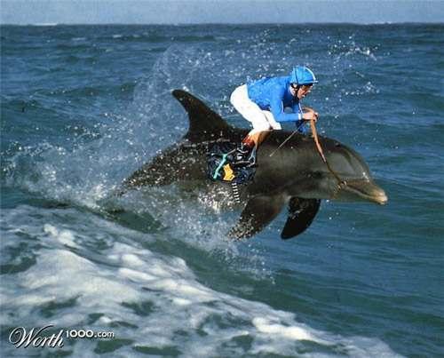 dolphin-racing-.jpg